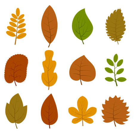 Set of twelve different autumn leaves isolated on white background.
