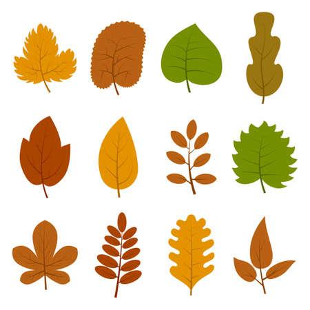Set of twelve different autumn leaves. 일러스트