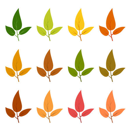 Set of twelve autumn leaves in different autumn colors. Vector illustration.