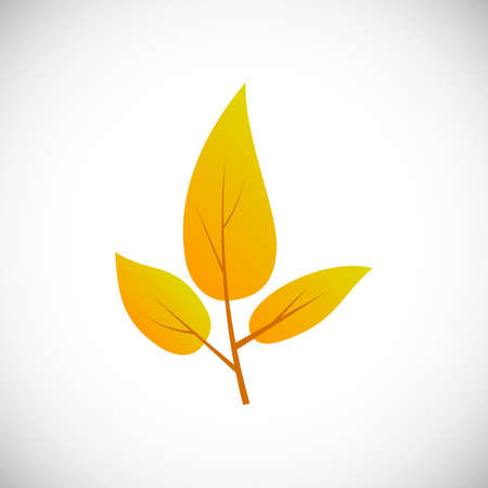 Yellow leaf. Autumn leaf of a tree on a white background. Vector illustration