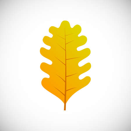 Yellow oak leaf. Autumn leaf of a tree on a white background. Vector illustration