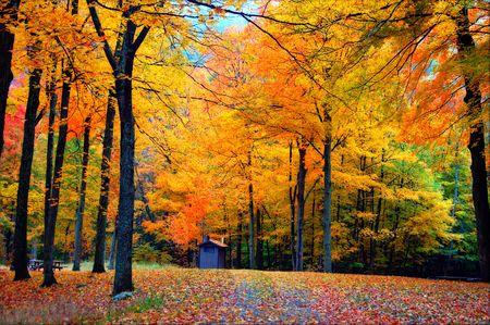 Fall Foliage Backdrop
