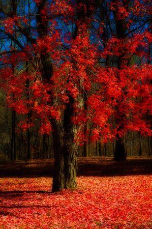Fall Tree Stock Photo