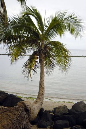 Cocunut tree, few rocks by a tropical beach on a overcast summer day Stock Photo
