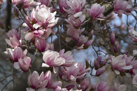 Closeup shot of Cherry blossom flowers during spring 免版税图像
