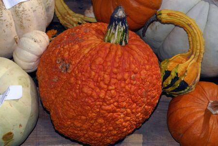 Freshly farm grown pumpkins ready for  Stock Photo - 2006630