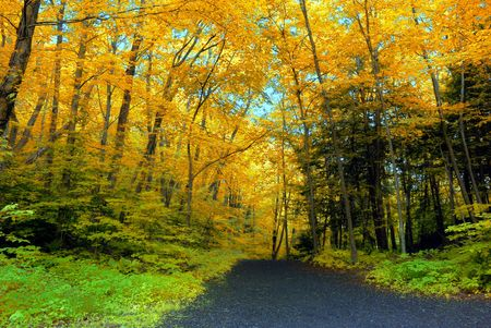 macr: Bright orange colored leaves during the fall season
