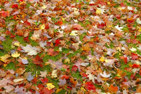 Vibrant fall foliage on a bright overcast day fallen leaves photo