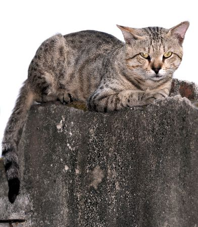 A street cat sitting on the wall waiting to jump photo