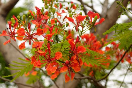 Beautiful red tropical flowers on a bright summer day photo