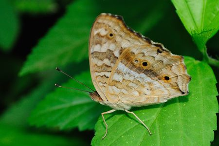A beautiful butterfly perching on a leaf