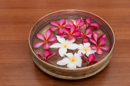 Colorful Frangipani flowers in abowl of water Stock Photo - 25381940