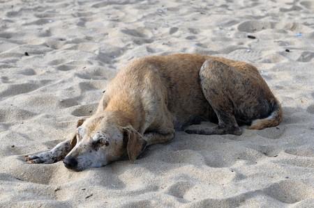 an injured dog abandoned at the beach photo