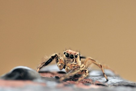 Close up shot of a jumping spider  photo