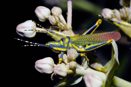 a painted grass hopper perching on a leaf photo