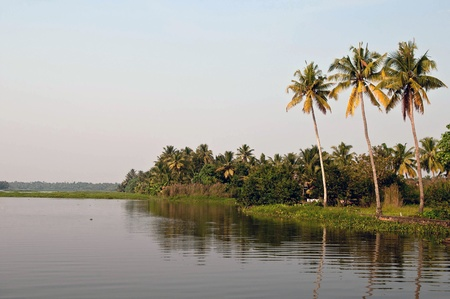 Palm trees reflection in Kerala backwaters, Cochin, India Stock Photo - 8698631