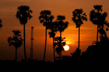 palm trees sunset golden red sky backlight in tropiacal India Stock Photo - 8693076