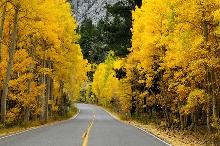 Autumn foliage at full bloom in mono lake region california photo