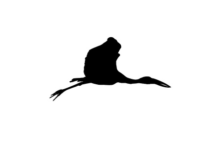 oscitans: Asian open bill stork flying high silhouette image
