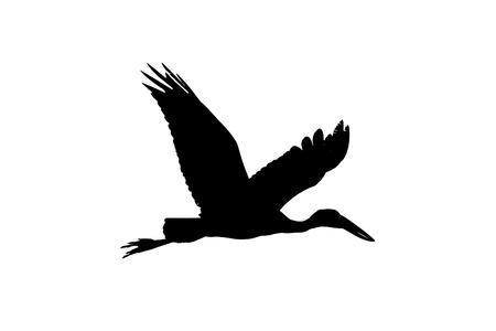 Asian open bill stork flying high silhouette image photo