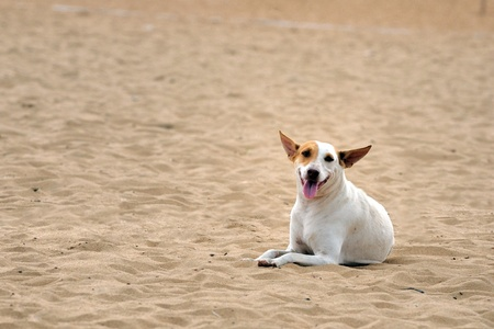 A street dog looking abandoned at a local beach Stock Photo - 8900260