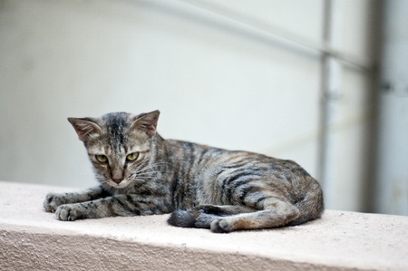 A young cat resting on the wall photo