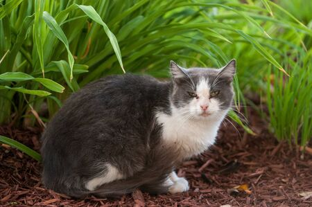 perceive: A stray cat watching very cautiously to the camera Stock Photo