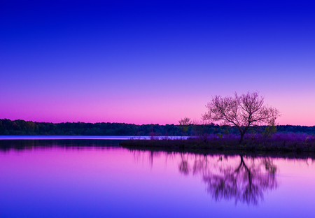 horizon reflection: A lonely tree reflecting on a pool of water Stock Photo