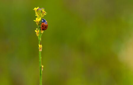 A ladybug perching on the top of a weed Imagens