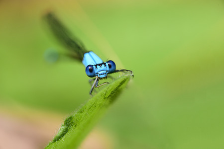 A damselfly perching on a blade of grass Imagens