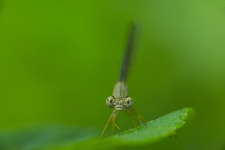 A damselfly perching on a blade of grass Stock Photo