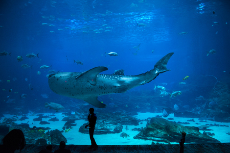 group of People observing fish at an aquarium Imagens