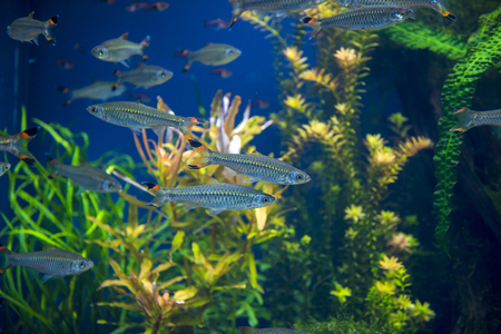 group of fishes swimming in an aquarium Imagens