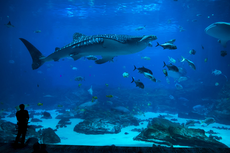 Groep mensen die vis in een aquarium waarnemen Redactioneel