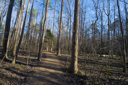 Freshly packed running trails during summer season Imagens