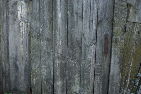 hobnail: old wooden background door texture
