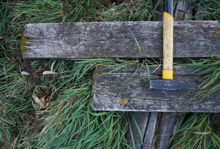 yeloow: yellow hammer on the old wood and green grass