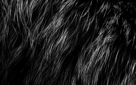 pelage: fur background