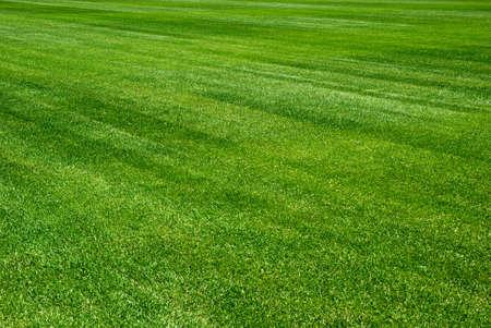 Green Grass Background Stock Photo - 7128482