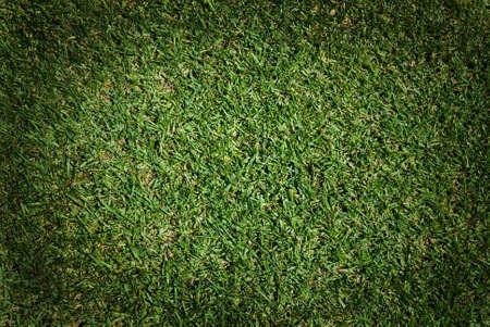 Fundo da grama verde Banco de Imagens
