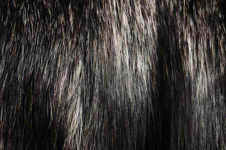 pelage: Warm polar Fox fur. Useful as background or texture