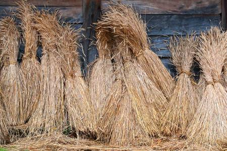 sheaves of wheat photo