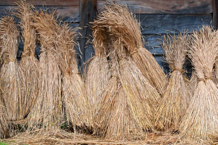 royalty free photo: sheaves of wheat