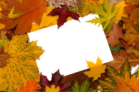 simple flower: Autumn leaves background with empty greeting card for text