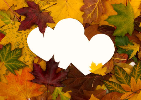 Autumn leaves background with empty greeting card for text photo