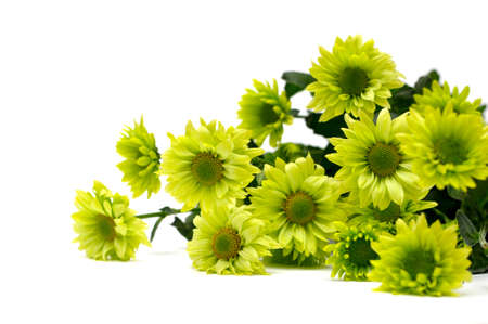 chrysanthemum bouquet isolated on white photo