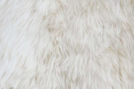 Sheep fur texture. Macro. Stock Photo - 14439819