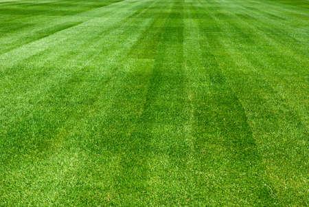grass background: Green grass background
