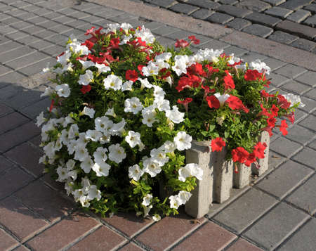 planter: Colorful spring flower planter Stock Photo
