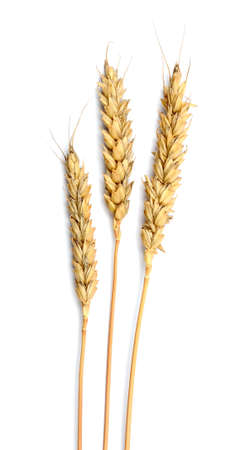 Grain ears isolated over white background Stock Photo - 15360969